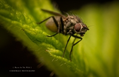 fly-UK