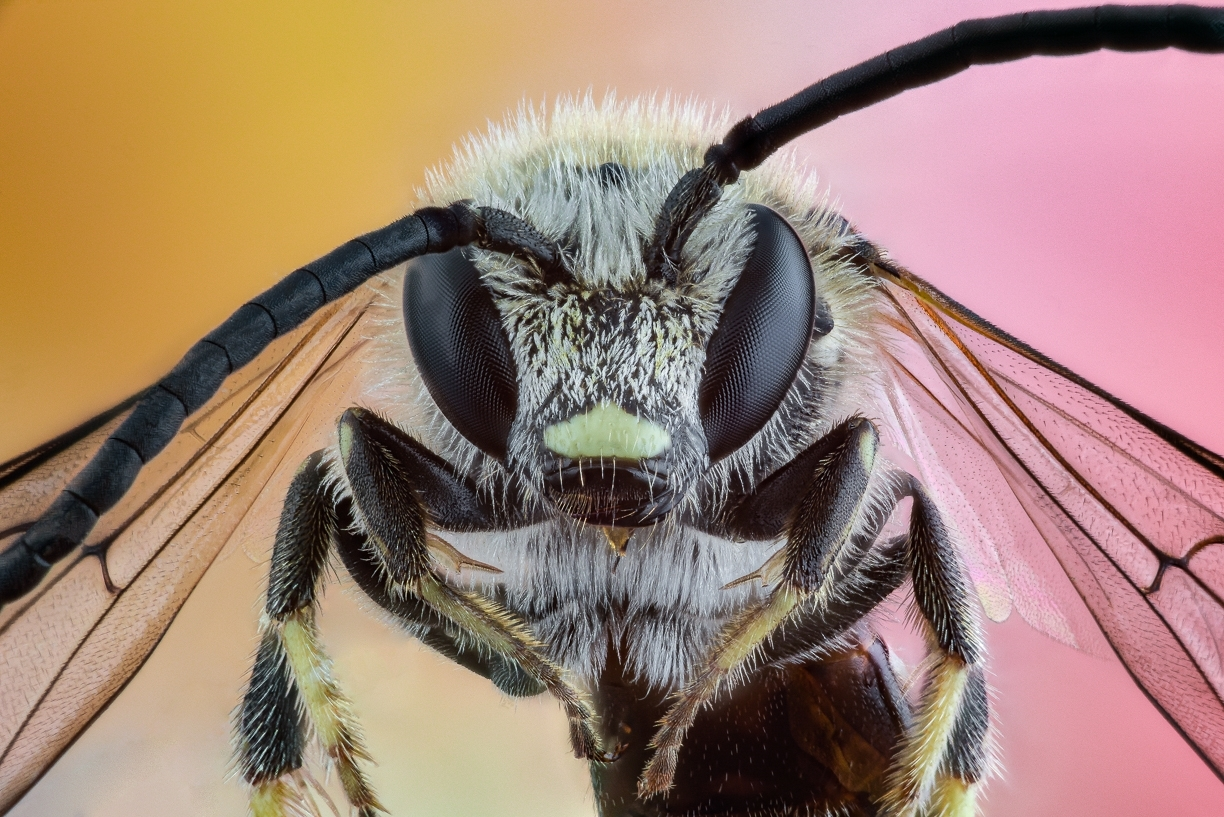 small bee-2