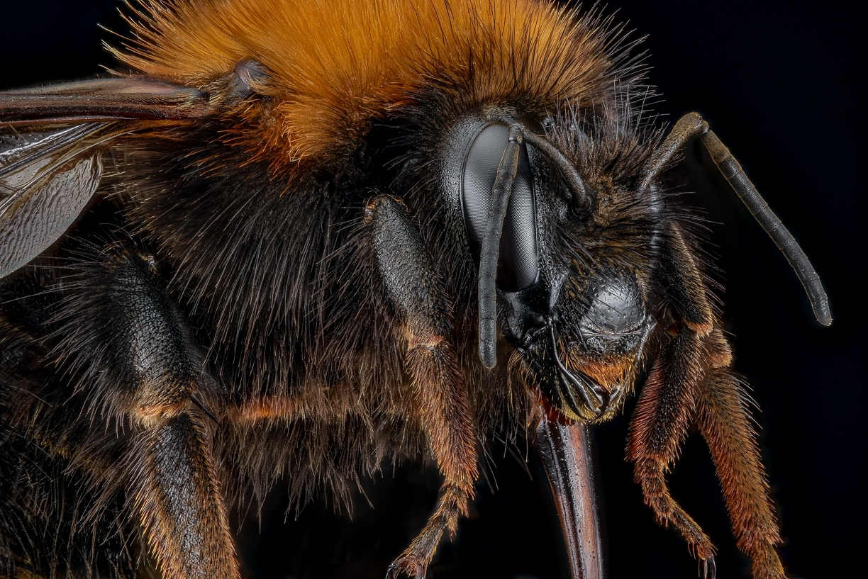 bumble bee-10