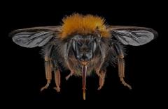 bumble bee-9