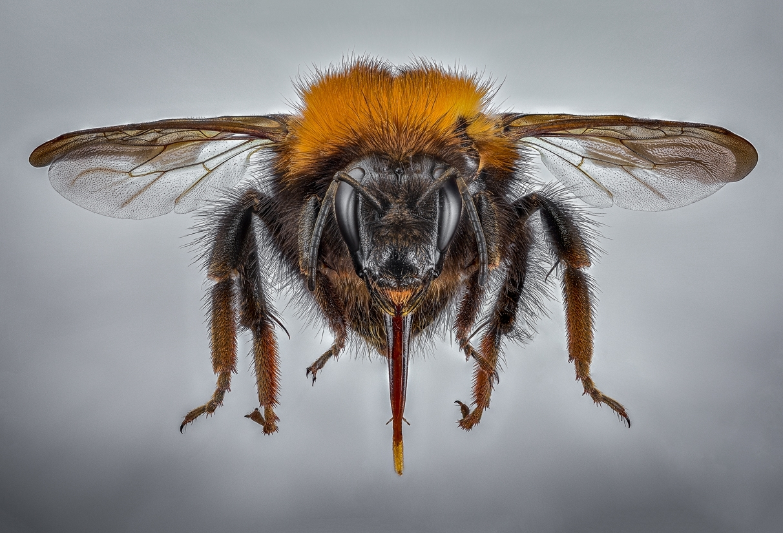 bumble bee-11
