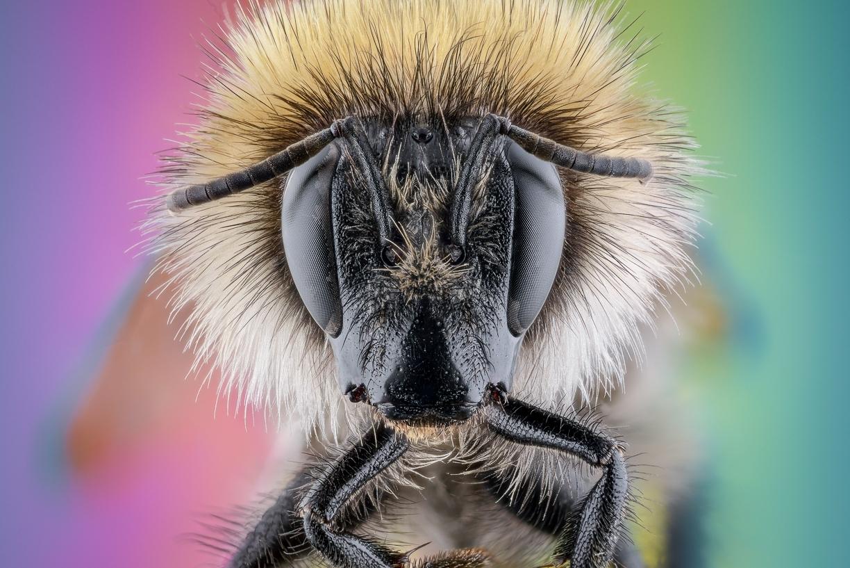 bumble bee-7