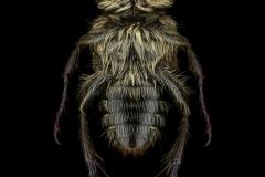 Chromoptilia-diversipes-Madagascar-2