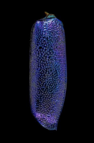Cratohaerea-chrysopyga-Guinea-Africa
