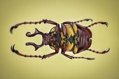 reindeer beetle [Dicranocephalus wallichii]-2