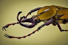 reindeer beetle [Dicranocephalus wallichii]-4