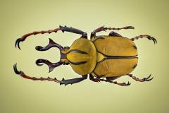 reindeer beetle [Dicranocephalus wallichii]