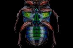 Euchilia-puncticollis-Madagascar-2