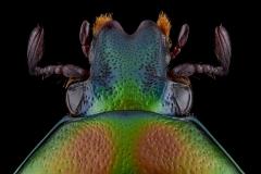 Euchilia-puncticollis-Madagascar-3