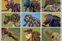 9-flies-2