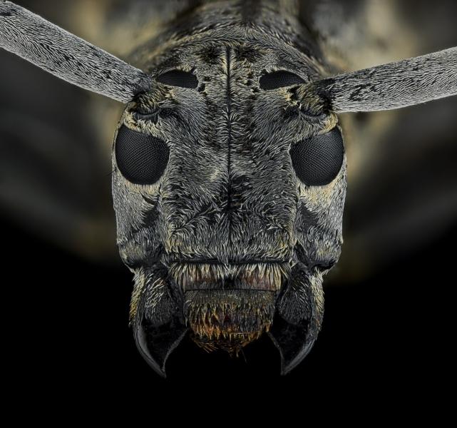 Frea-sparsa-Madagascar-3