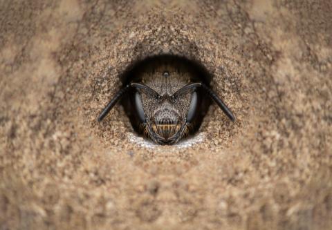 mining-bee-Romania