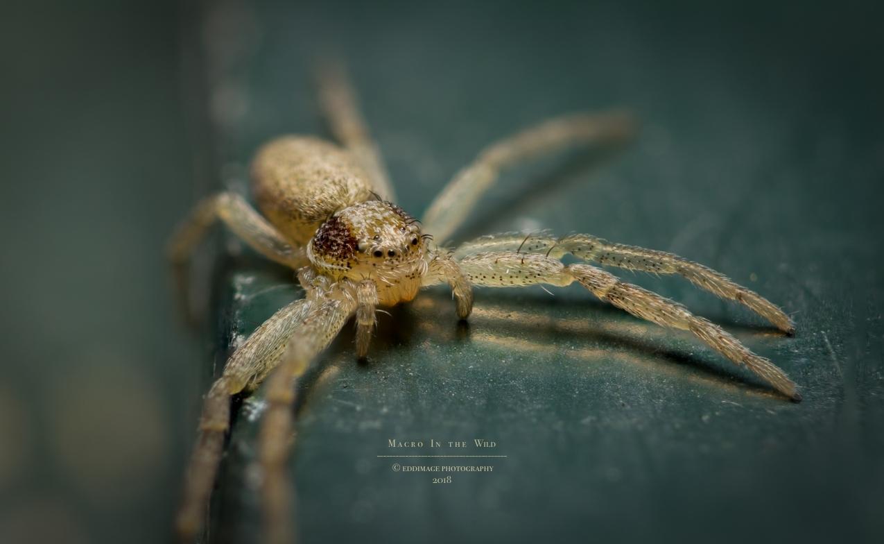 20170406-spider