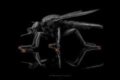 1_Microstylum-cilipes-Madagascar-3