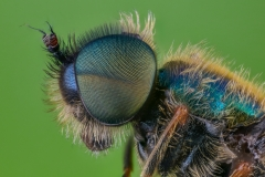 soldier fly-3