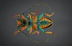 longhorn beetle [Sternotomis chrysopras reducta]-3