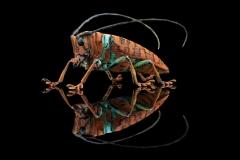 longhorn beetle [Sternotomis chrysopras reducta] - Cameroon