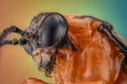 small orange wasp