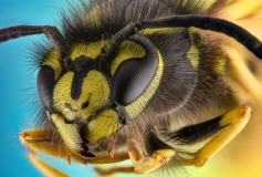 wasp-12