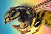 wasp-9